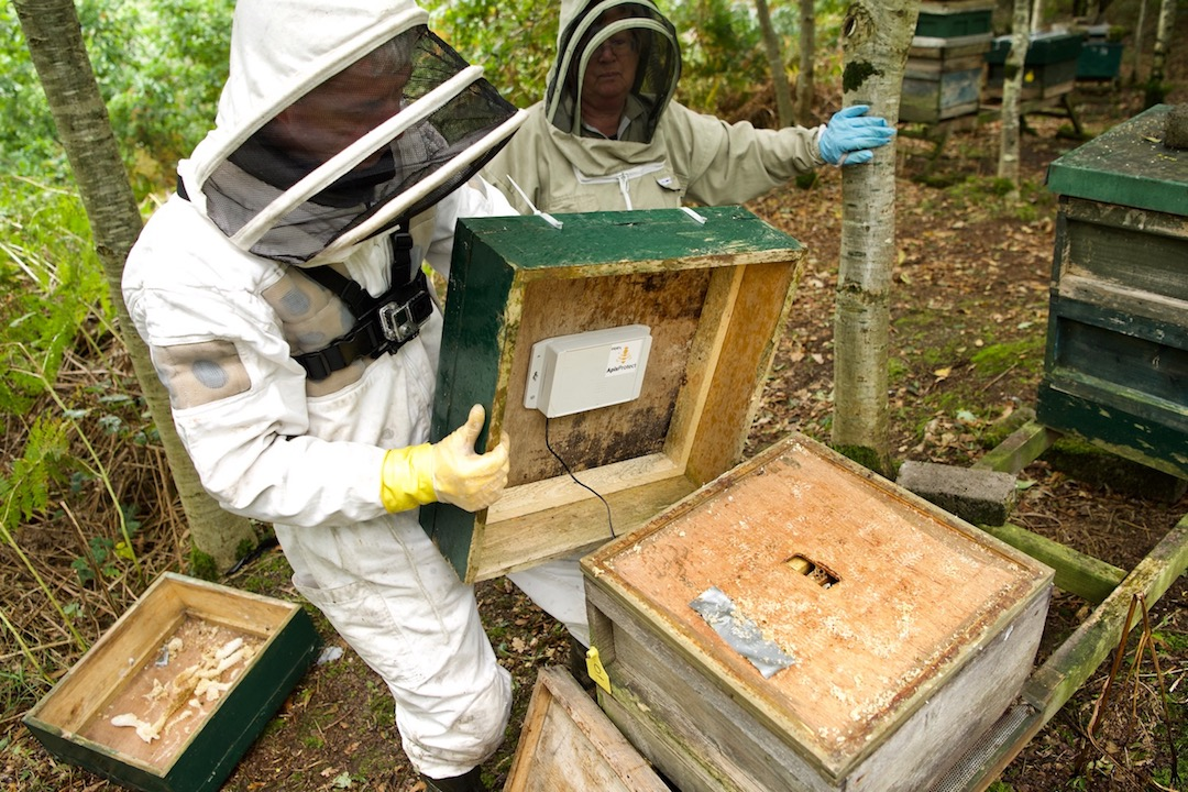 ApisProtect partners with Inmarsat to save bees and increase global crop production