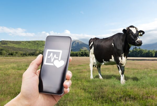 Fitbits for cows: how wearables are driving the 'Internet of Animals' in agriculture